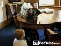 Кот и малыш играют в бумажный мяч