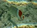 Подводные съемки в Египте. Underwater shootings in Red sea Egypt