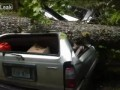 Toyota 4-Runner и дерево