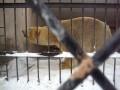 В Казанском зоопарке