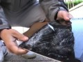 Разбитые планшеты iPad 2, Xoom, Galaxy