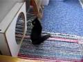Кот и отражение