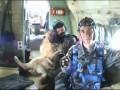 Собака и парашют
