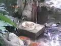 Утка кормит рыб