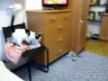 Кошка из матрицы.avi