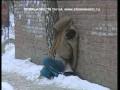 Человек замерз в сугробе