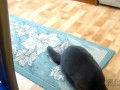 Кот просит вкусняшку
