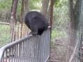 Мишка балансирует