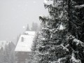 snowy winter00025