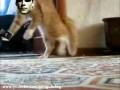 Кот ушел красиво 2 (new version) Thriller Cat 2