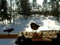Птички в твиттере