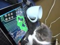 Кот Василий против iPad`а | Котач :3