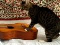 Кот Вася играет на гитаре