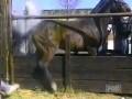 Лошадь заклеймили.mpeg