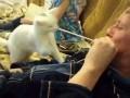 Кошка и невидимый враг