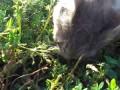 Кошка ест воробья