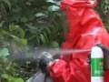 Пожарные уничтожают гиганских шершней В Китае .