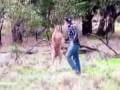 драка с кенгуру