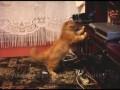 Кот против блю-рэй проигрывателя