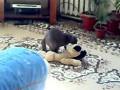 Кот и плюшевая собачка)