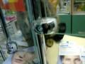 Кот заведует аптекой