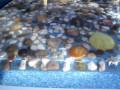 Раковина с морской галькой