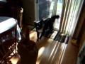 "Как собака реагирует на ""фак"""