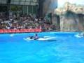 Вальс дельфинов