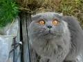Практически говорящий кот