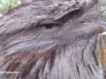 Необычная сова