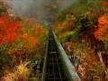 Осень в Японии. Тур Японский листопад: жёлто-красные дожди 2016