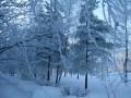 blue winter00015