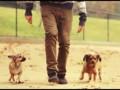 Собакобординг