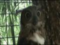 Эпическая сова