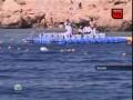 Сербский турист упал прямо на голову акуле и убил ее