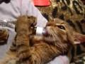 Кот с похмелья