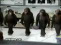 Прикол! Обезьяны танцуют лезгинку!