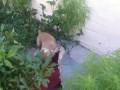 Собака щенок рвет тряпку под Drum and Bass
