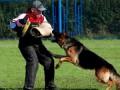 ТОП 10 Самых опасных собак [Топ 10 СаМыХ Ожидаемых]