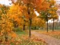 autunno00010