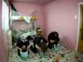 Покраска комнаты металлистами
