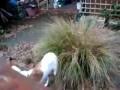 Пес и куст