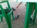 Учимся ловить голубя, не встава со стула