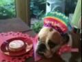 День рождения Роузи