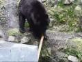 Медвежье кунг-фу