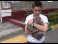 Москвич выбросил с пятого этажа кошку своей матери