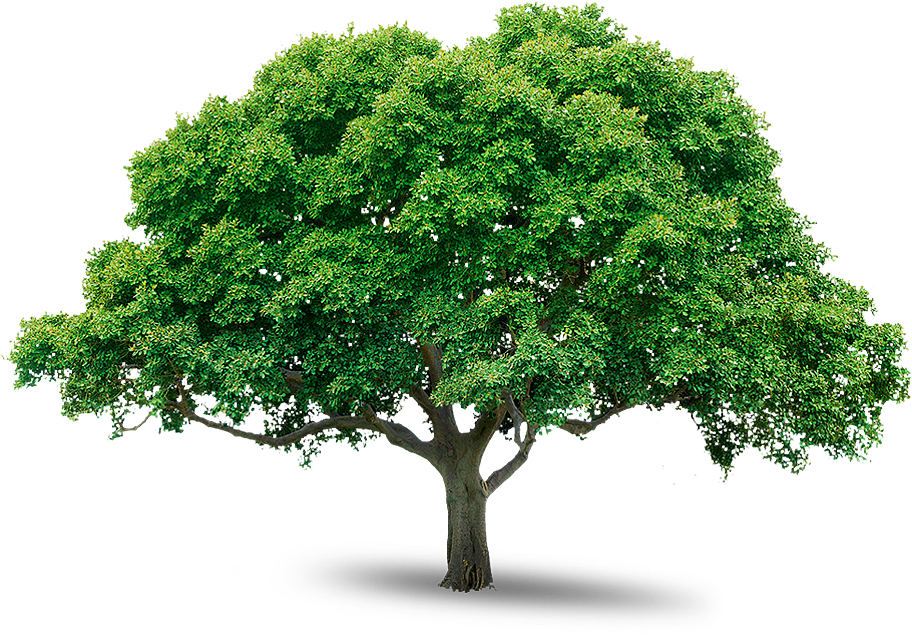 tree_PNG216