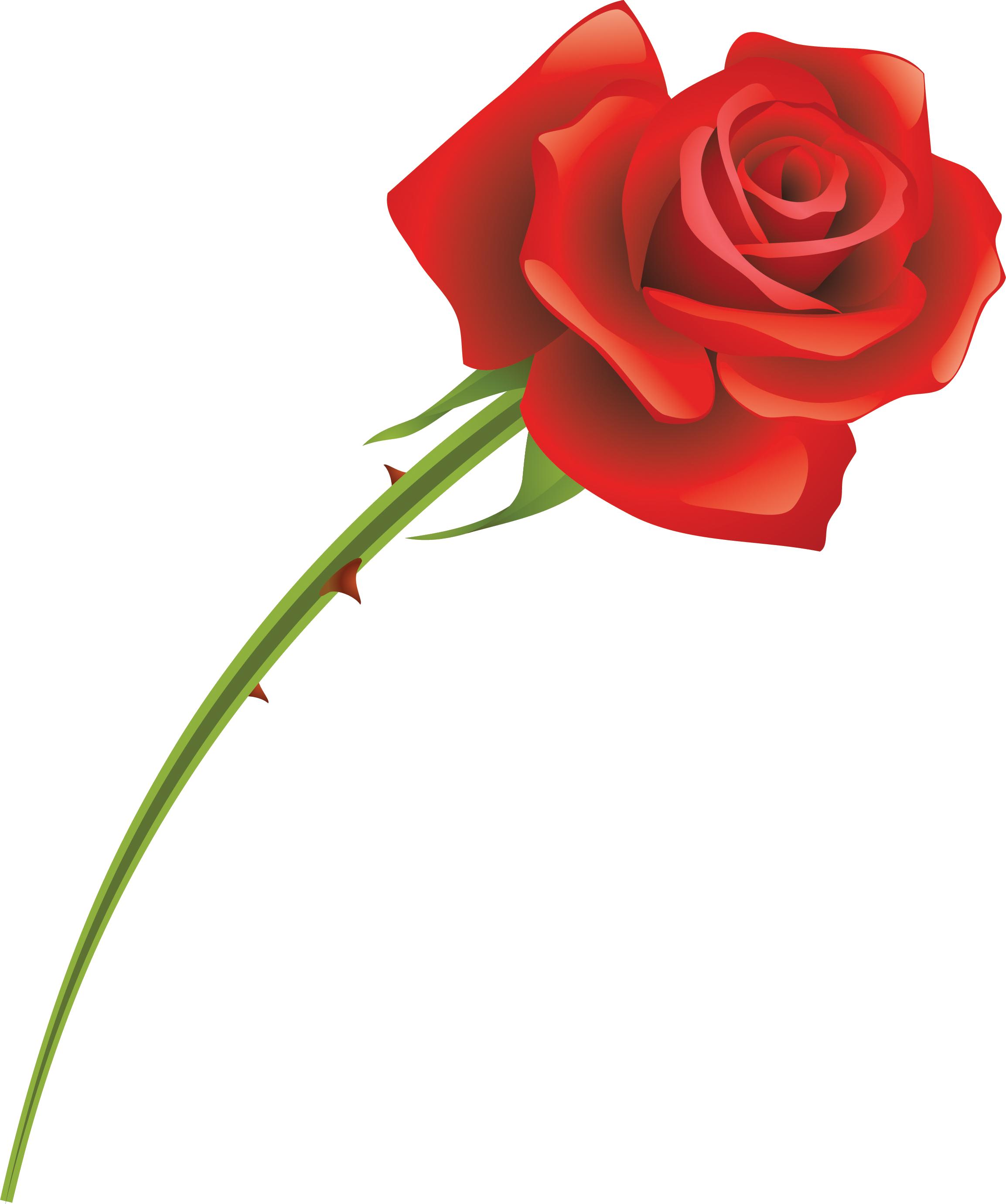 Красные розы картинки на прозрачном фоне