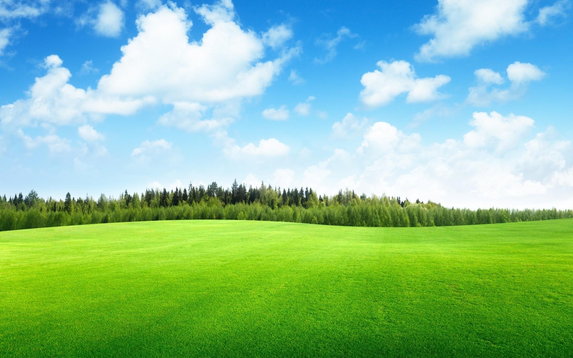 Картинки голубое небо и зелень