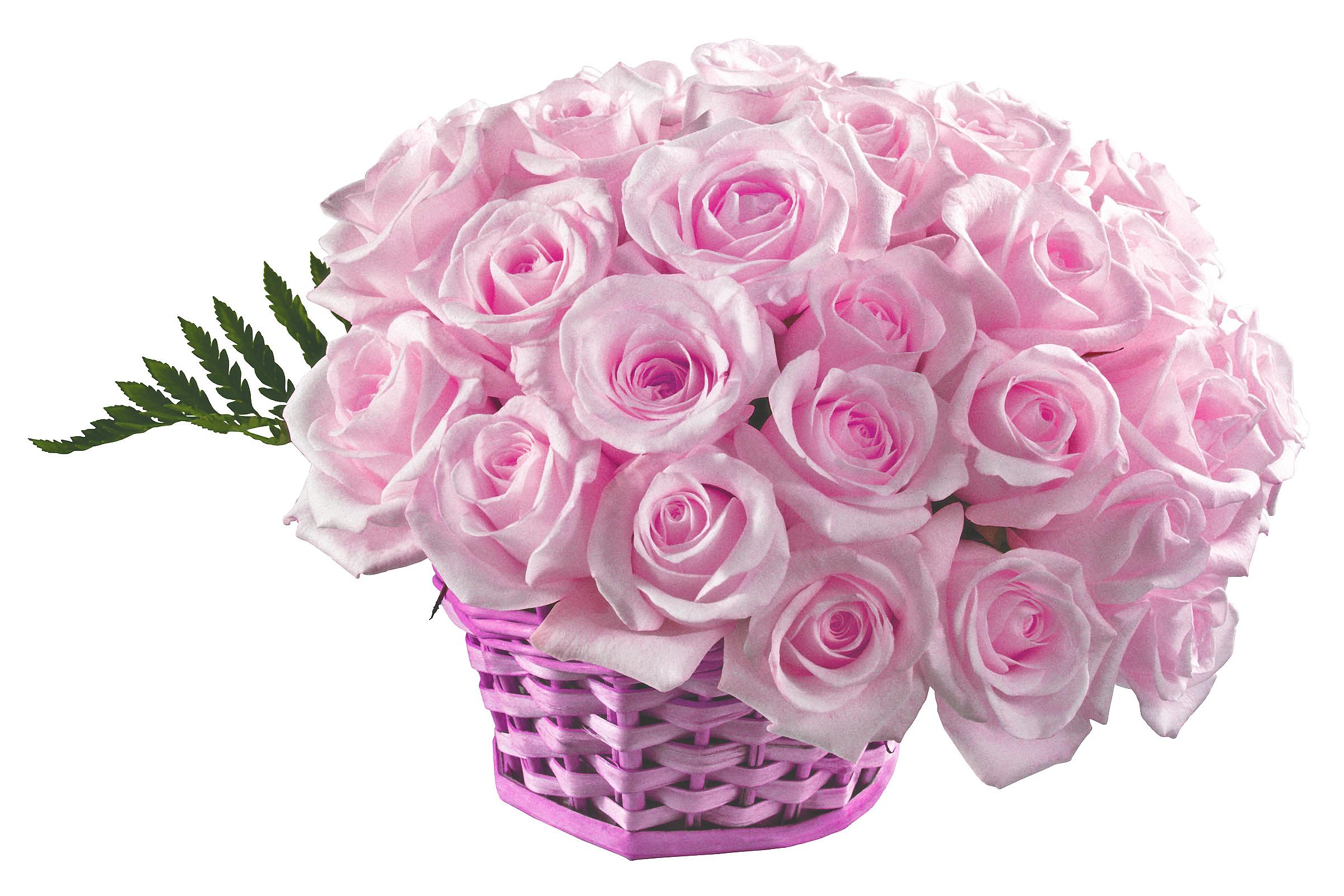 Картинка букета роз на белом фоне